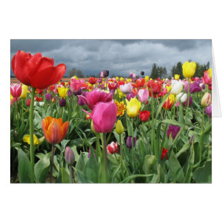 Tulips Field Card