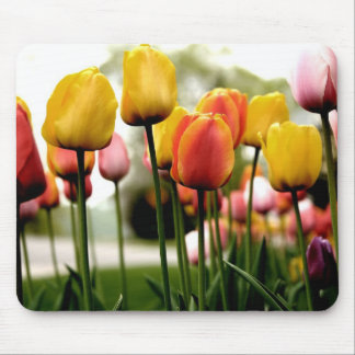Tulips from Kelsy Mouse Pad