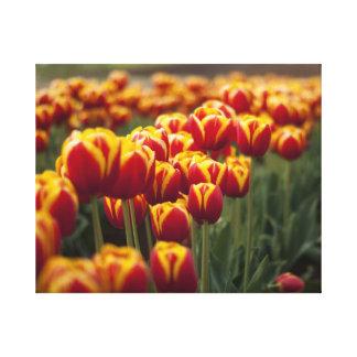 Tulips Gallery Wrap Canvas