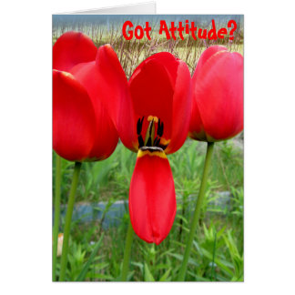 Tulips Got Attitude Card