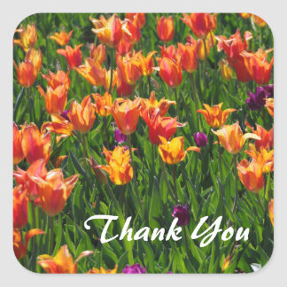 Tulips in Orange Square Sticker