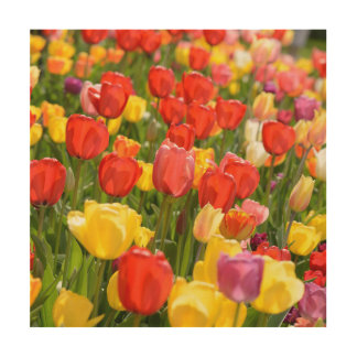 Tulips in the Garden Wood Print