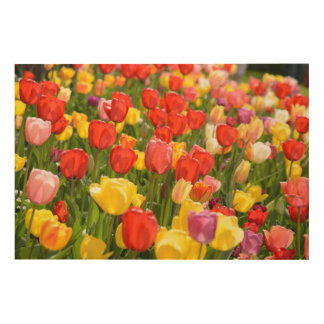Tulips in the Garden Wood Wall Decor