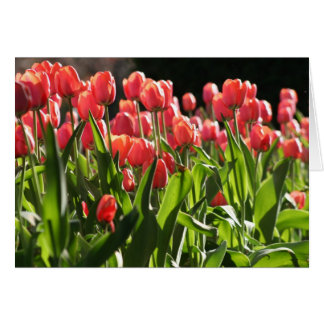 Tulips in the Public Garden Card