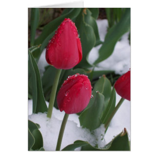 Tulips in the snow greeting cards