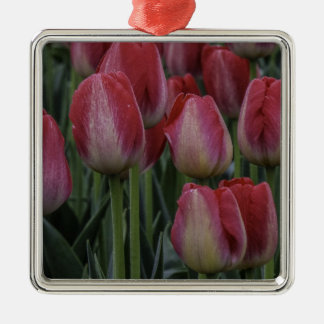 Tulips in the Spring Silver-Colored Square Decoration