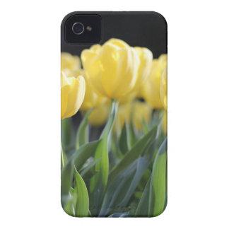 Tulips iPhone 4 Case