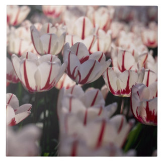 Tulips Large Square Tile