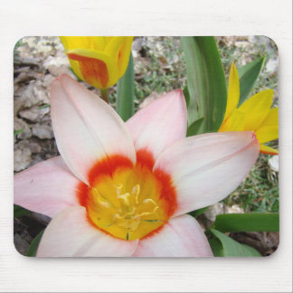 TULIPS MOUSEPADS Pink Tulip Flowers MOUSE PAD