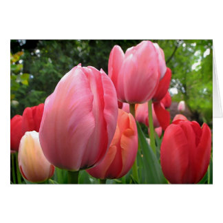 Tulips of Spring Greeting Card