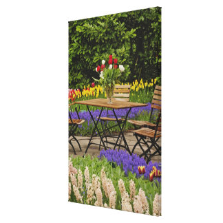 Tulips of table in garden, Keukenhof Gardens, Stretched Canvas Print