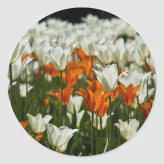 Tulips Sticker | Sticker Tulpen