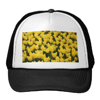 Tulp Collection Hat