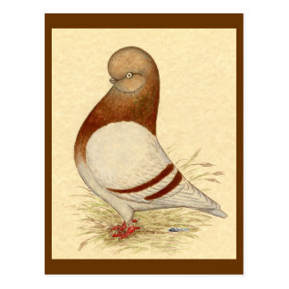 Tumbler Pigeon:  LFCL Mealy Postcard