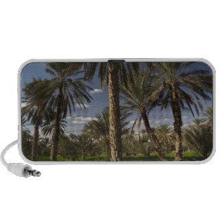 Tunisia, Ksour Area, Ksar Ghilane, date palm Laptop Speaker