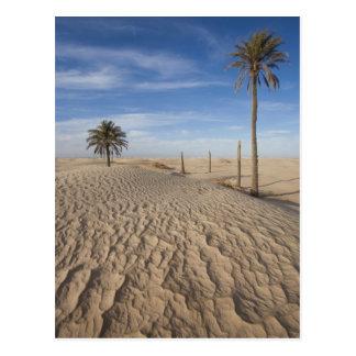 Tunisia, Sahara Desert, Douz, Great Dune, dawn Postcard