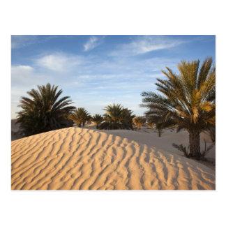 Tunisia, Sahara Desert, Douz, Great Dune, palm 2 Postcard