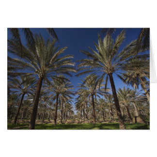Tunisia, Sahara Desert, Douz, Zone Touristique, 2 Card