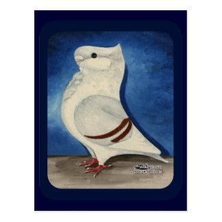 Turbit Pigeon 1979 Postcard