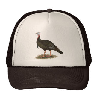 Turkey:  Eastern Wild Tom Cap