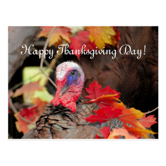 Turkey In Leaves Thanksgiving Day Postcard
