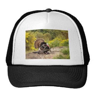 Turkey in Spring Hat