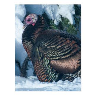 Turkey in Winter Postcard