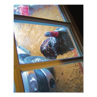 Turkey looking in door photo