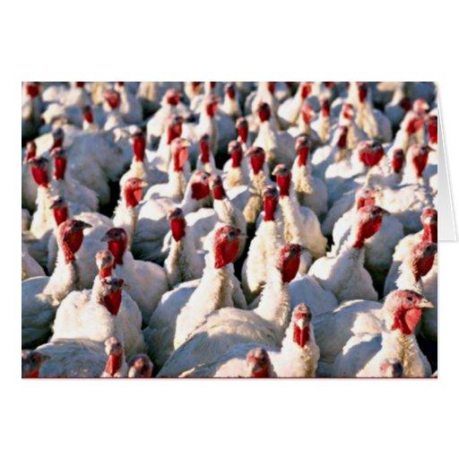 Turkey Photograph Thanksgiving Turkey Day Card