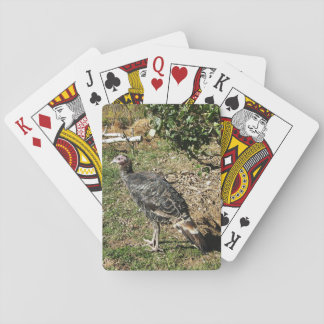 Turkey Poult Standing Poker Cards