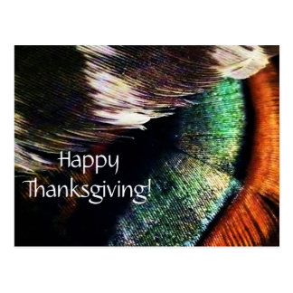 Turkey Tail Feathers Art Photo Happy Thanksgiving Postcard