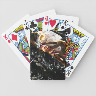 Turkey Tails Bicycle Playing Cards
