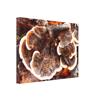 Turkey Tails Fungi Canvas Print