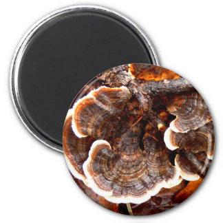 Turkey Tails Mushroom Magnet