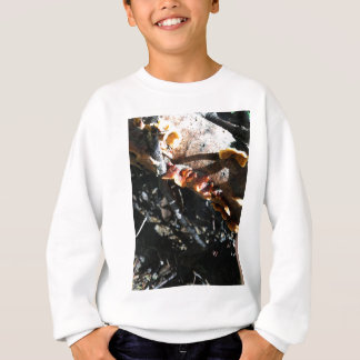 Turkey Tails Sweatshirt
