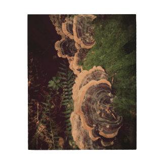 Turkey Tails Wood Wall Art