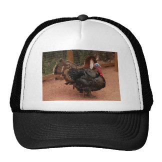 turkey, thanksgiving cap