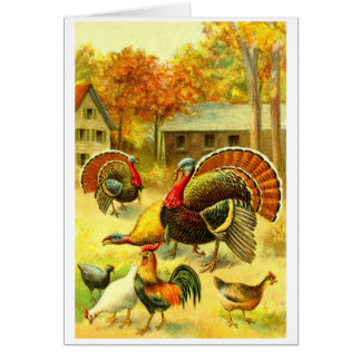 Turkeys and chickens card