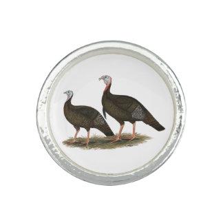 Turkeys Eastern Wild Pair