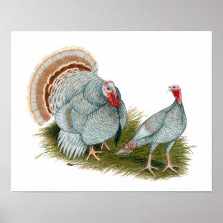 Turkeys:  Lilac Poster