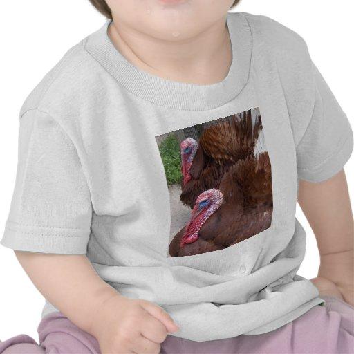 turkeys shirts