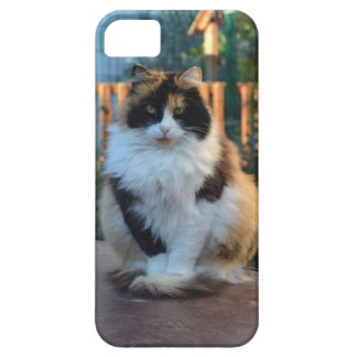 Turkish Van Barely There iPhone 5 Case