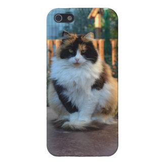 Turkish Van iPhone 5 Case