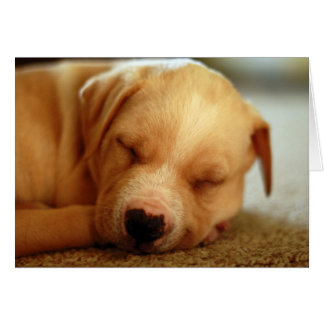 Turmeric the Sleepy Yellow Lab Mix Rescue Puppy Greeting Card