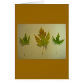 Turning Maple Leaves Card