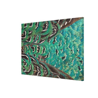 Turquoise Pheasant Feather Detail Canvas Print