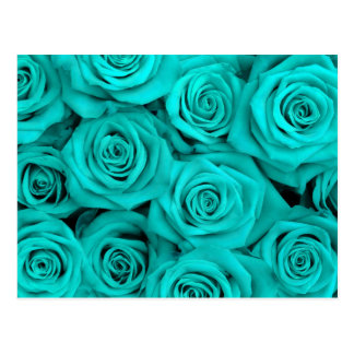 Turquoise Spectacular Roses Postcard