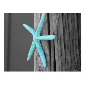 Turquoise Starfish Coastal Postcard