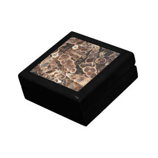 Turritella Agate Fossils Image Gift Box