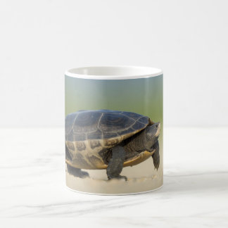 Turtle / Amphibian / Reptile Closeup Photo Mug